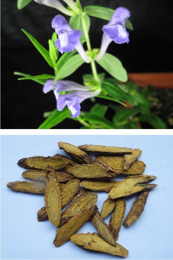 图 黄芩及其药用制品