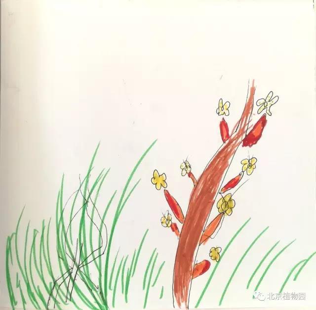 """3月11日至4月8日,北京植物園""""自然享樂""""探索系列之""""萌動的小草""""主題活動以""""光禿禿背后的秘密""""、""""看!花姑娘露出了羞澀的小臉兒""""和""""花姑娘的舞會""""三期活動為一個完整單元,為19組8~10歲親子家庭開啟了探索植物生長之門。每個孩子不僅要完成""""自然筆記手冊""""上的所有內容,還要選定一種植物作為自己的""""植物伙伴"""",并在三次活動中以自然筆記的形式"""